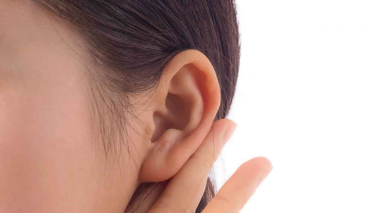 telinga luar